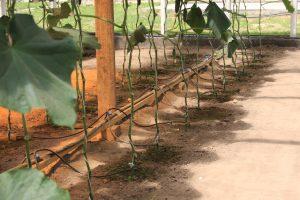 Системы полива для фермеров, капельный полив.